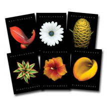 Assorted Nightflowers I Postcards